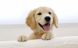 犬が舌を出しっぱなしのときはどんな気持ち??