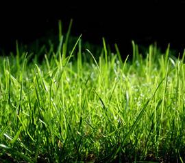 犬が草を食べているけどどうして??