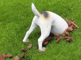 犬が地面に穴を掘るのはどうして??