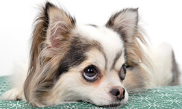 犬と遊んでいると急に態度を変えるのはどうして??