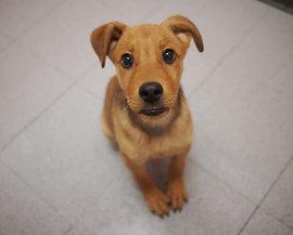 帰宅すると玄関のドアを開けてないのに愛犬が吠えて出迎えてくれるのはどうして??
