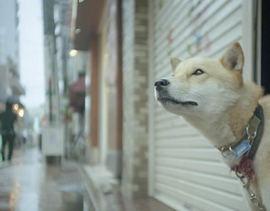 雨の日にも散歩に行きたがるのはどうして??