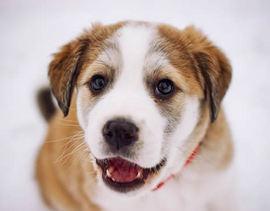 犬用サプリメントの効用と基本