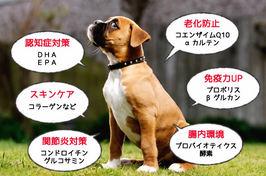 目的別・症状別でみる犬用サプリメントの選び方