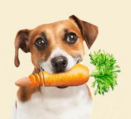 犬専用の総合サプリメントのかしこい選び方