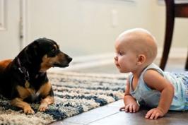 生まれたばかりの赤ちゃんにべったりなのはどうして??