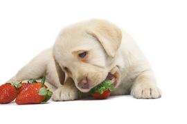 うちの犬は甘いものが大好きだけど大丈夫??