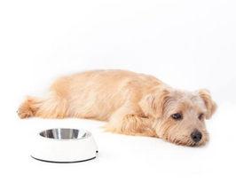 食事の態度でわかる犬の本音