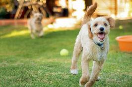 遊びの様子でわかる犬の本音