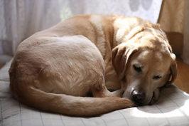寝ている姿でわかる犬の本音