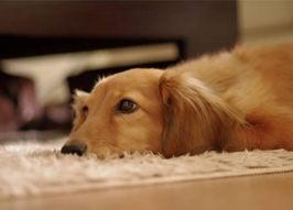 お留守番の様子でわかる犬の本音