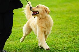散歩の様子でわかる犬の本音