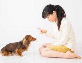 叱ったときの態度でわかる犬の本音