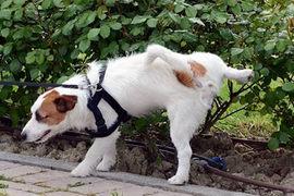 オシッコとマーキングでわかる犬の本音