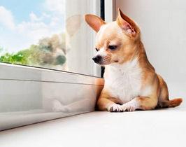 普段の居場所でわかる犬の本音