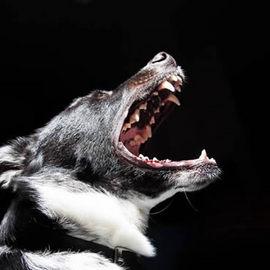 ムダ吠えする犬の本音を知ればいい子に生まれ変われる!