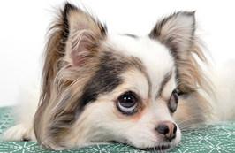 イヌの記憶力はどのくらいなの?