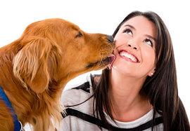 なぜ犬は人の顔をペロペロ舐めるの??
