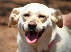 犬が汗をかかないのはどうして??