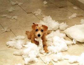 犬にもストレスがあるの?