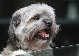 犬が乗り物酔いをしてしまうけれど、その対策法は??
