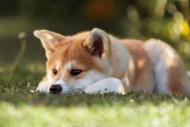 犬にサプリメントを与えるときの注意点