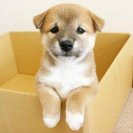 愛犬の便秘に効くサプリメントや食材は?